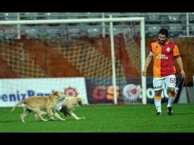 Собаки чуть не сорвали футбольный матч