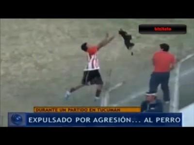 Футболиста выгнали из клуба за жестокое обращение с собакой, выбежавшей на поле