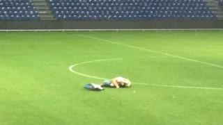 Болельщики «Брондбю» занялись сексом прямо на стадионе
